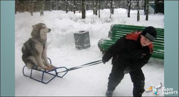 kid-pulling-dog-sled