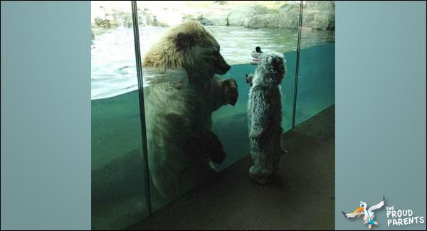 baby-vs-bear