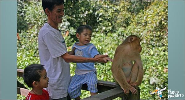 parent-fail-zoo